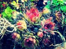 母鸡&别致的植物拼贴画 库存图片