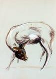 母鹿图画 库存图片