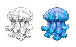 水母,手工制造墨水图画,传染媒介 库存照片