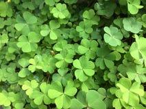 每两年植物湿气  免版税库存图片