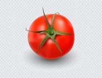 4每个例证层分隔的集合蕃茄差异向量 红色蕃茄收藏 在透明背景的照片拟真的传染媒介蕃茄 向量例证