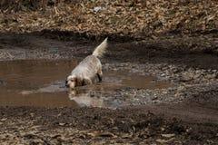 每天人生,当狗获得得到的乐趣湿在泥 库存图片