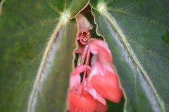 每天早晨欢迎的花和它带来尝试新的道路到的动物界的特别机会 免版税库存照片