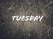 每日名字'星期二'在绿草背景 免版税库存照片