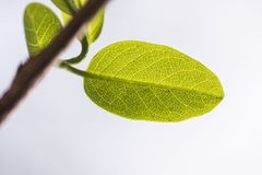 每片叶子本身是自然奇迹  免版税库存照片