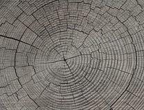 每年年轮结构树 免版税库存图片