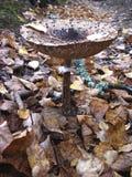 毒不可食的蘑菇真菌 免版税库存图片