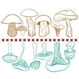 毒和可食的蘑菇向量表 图库摄影