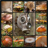 毒性森林 库存照片