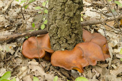毒性蘑菇 免版税库存照片