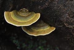 毒物蘑菇 库存图片