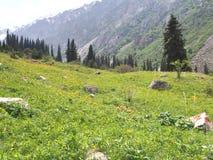 比什凯克吉尔吉斯斯坦天狮单山的丙氨酸Archa国家公园  库存图片