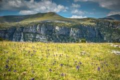 比利牛斯山在夏天使- Anisclo峡谷环境美化 韦斯卡省, 图库摄影