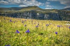 比利牛斯山在夏天使- Anisclo峡谷环境美化 韦斯卡省, 免版税库存图片