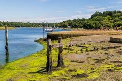 比尤利河,坚硬小圆盾的` s,新的森林,英国,团结了Ki 图库摄影