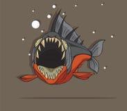比拉鱼鱼传染媒介 库存照片