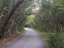 比斯坎岛公园道路 库存照片
