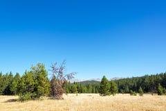 比格霍恩山风景 库存图片