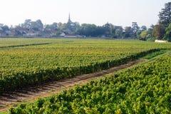 黑比诺葡萄酒葡萄园博恩伯根地法国 免版税库存图片