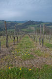 黑比诺葡萄酒葡萄园找出Oltrepo Pavese 图库摄影