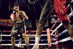 比赛的专业拳击手 库存图片