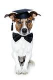 毕业的狗 免版税图库摄影