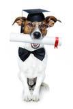 毕业的狗 图库摄影