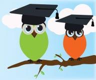 毕业的猫头鹰 库存图片