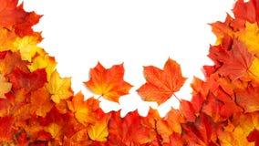 毗邻在白色隔绝的五颜六色的秋叶框架  免版税库存图片