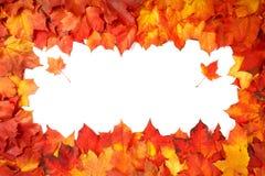 毗邻在白色隔绝的五颜六色的秋叶框架  免版税库存照片