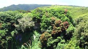 毛伊、夏威夷、热带花和瀑布视图从小山 股票视频