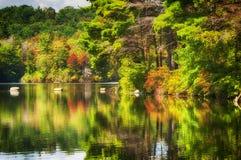 毛刺池塘国家公园在秋天 免版税库存图片