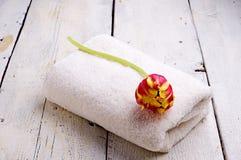毛巾和郁金香 库存图片