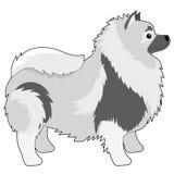 毛狮狗 免版税图库摄影