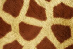 毛皮动物纹理,大的Girafe 库存照片