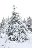 毛皮层下雪结构树 免版税库存照片