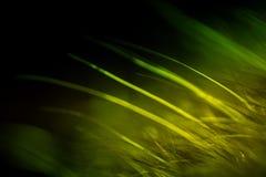 毛皮抽象宏指令在绿色口气的 图库摄影