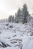 毛皮沼地生长小的结构树 库存照片