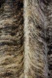 毛皮的样式 库存图片