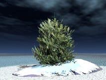 毛皮结构树 库存照片