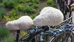 毛皮自行车位子 免版税库存照片