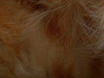 毛皮野生动物关闭纹理  免版税库存照片