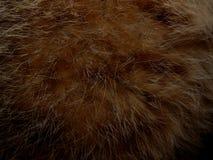 毛皮野生动物关闭纹理  库存照片