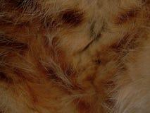 毛皮野生动物关闭纹理  库存图片