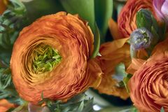 毛茛、银莲花属和假叶树属婚礼花束  库存图片