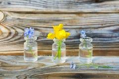 毛茛和勿忘草在小玻璃瓶子 库存照片