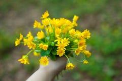 毛茛花束  图库摄影