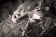 毛茸的小猫 库存图片