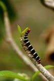 毛虫叶子 库存图片