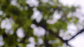 毛虫的特写镜头在慢动作的 爬行在树的网的毛虫 股票录像